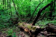 Majowy-las-Bielański-2015-Magia-Polski-10