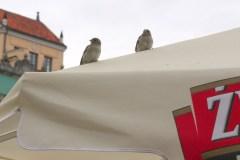 Spacer-po-Starym-i-Nowym-Mieście-2012-Magia-Polski-10