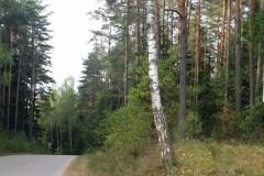 Szlak-Powstania-Styczniowego-obok-Arboretum-Magia-Polski-1