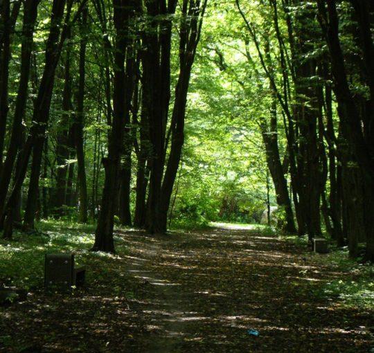 Park Zwierzyniec Białystok