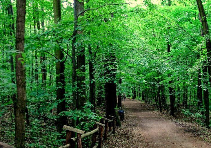 Majowy las Bielański 2015