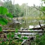 Rezerwat Torfy 2015
